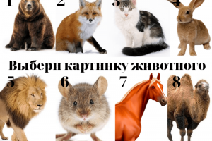 Тест Выбери картинку животного