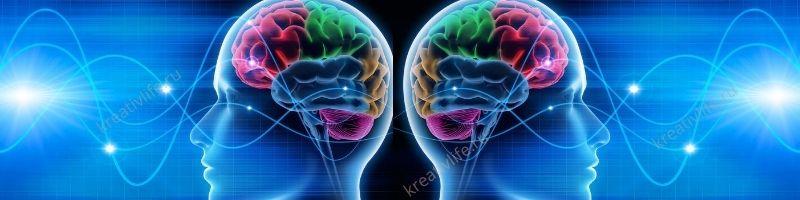 Ум, память, внимание, эрудиция, мышление, мозг, IQ