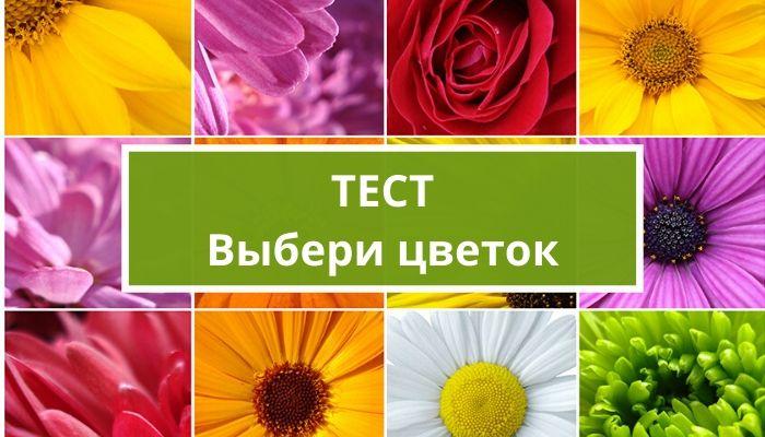 Тесты по картинкам: выбери цветок