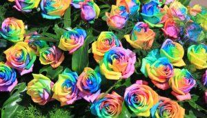 Какой цветок тебе нравится? Психологический тест