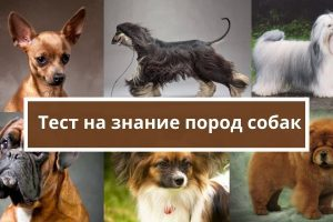 Тест на породу собак