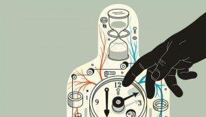 Организм человека. Как настроить биологические часы и внутренние ритмы