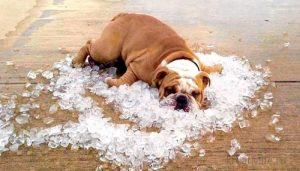 Очень жарко. Лето на улице.